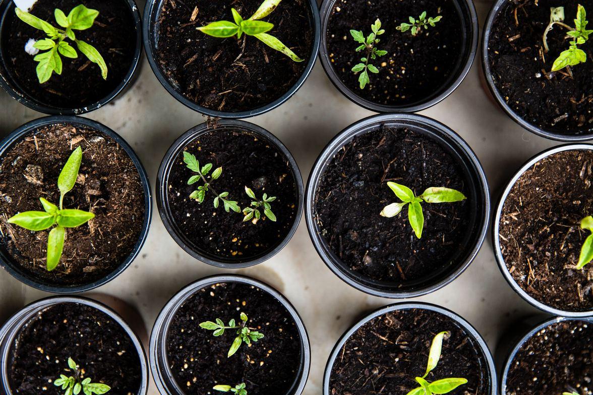 amarillo chiropractor gardening tips