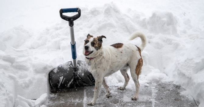8 Tips For Shoveling Snow The Right Way