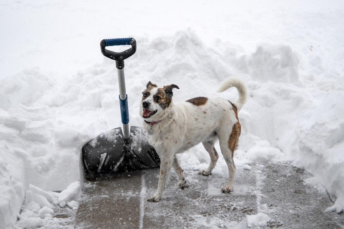 chiropractor in amarillo tx, amarillo chiropractor, shoveling snow, snow shovel